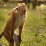 images1351852_MonkeyKingdom2015_8